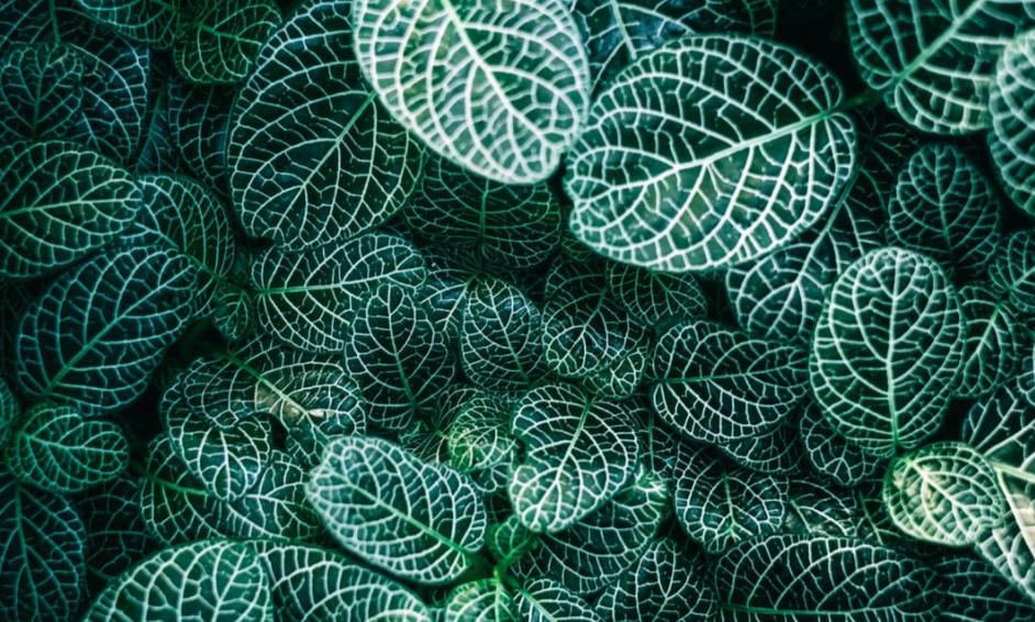 kunstpflanzen als alternative zu echten pflanzen silkmag. Black Bedroom Furniture Sets. Home Design Ideas